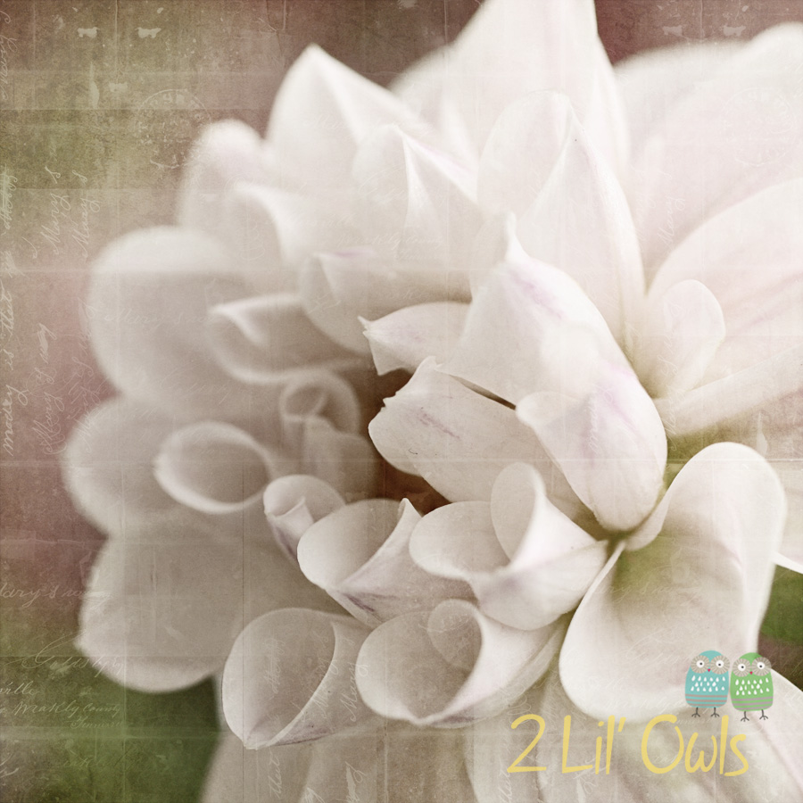Dahlia – New photo recipe