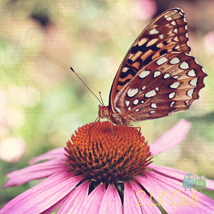 Butterfly on a Cone flower – New photo recipe