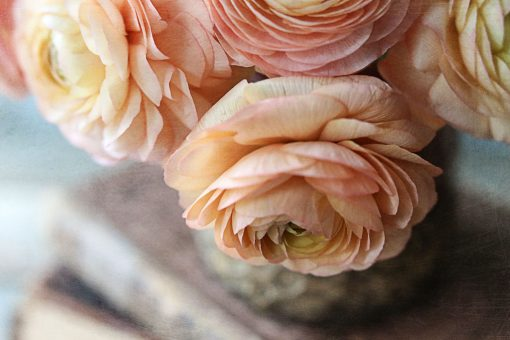 Beautiful-ranunculus-flowers-using-lightroom-presets-and-texture-overlays