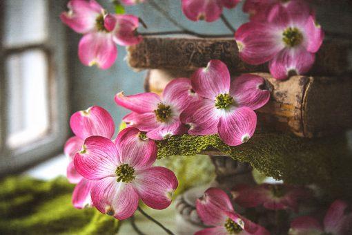 papermoon-fine-art-texture-overlays-for-photographers
