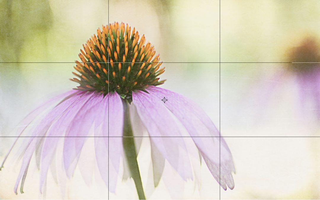 Photography Basics –  Composition