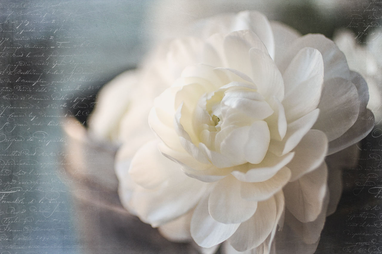 Watch Me Edit White Flower