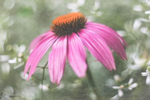 photography-texture-overlay