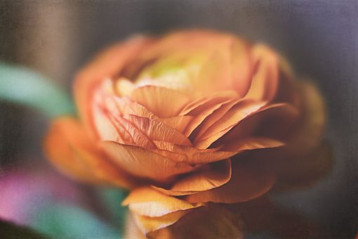 candescence-fine-art-texture-overlays-for-photoshop