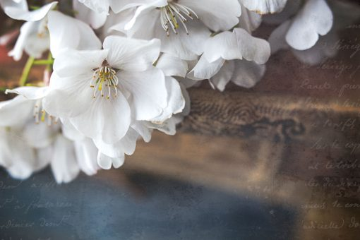 flower-stilllife-using-photoshop-textures-and-presets